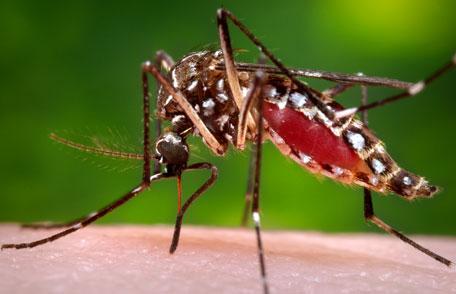 Mosquito-treatments-cape-cod